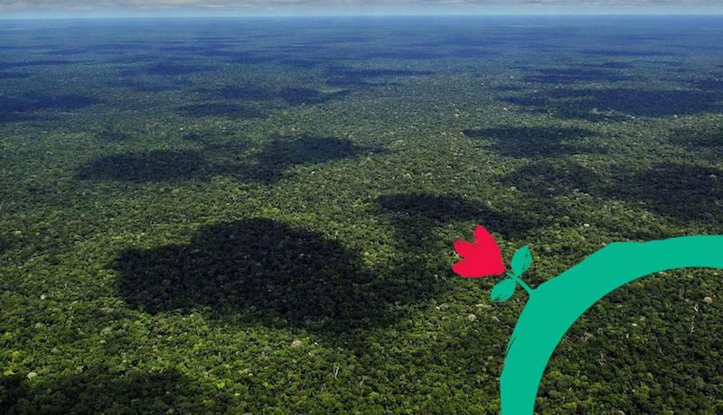 Imagem mostra uma floresta sendo vista pela perspectiva de cima.